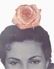 tienda flor rosa teja